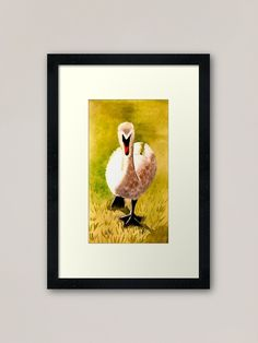 """""""Swan watercolour painting"""" Framed Art Print by PositivePrinted 