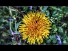 Film Miluj svoj život Mindfulness Meditation, Relax, Dandelion, My Photos, Youtube, Plants, Cinema, Pictures, Fitness