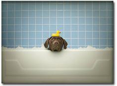 where's my duck?
