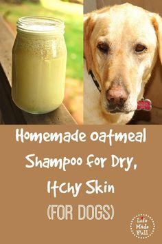 shampoo de aveia caseiro para cães