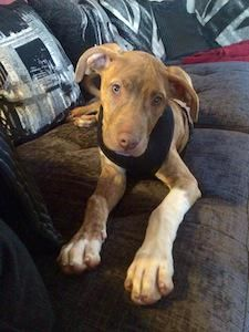 Woody 3-4month old cross breed lovely pup needs a home asap @CorynRDR to adopt him