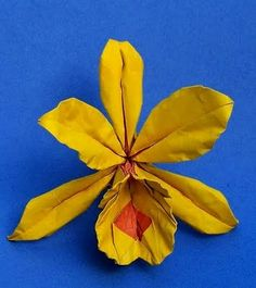 Orchid designed by Aldo Marcell