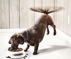 Purina dog food - Creative Advertising