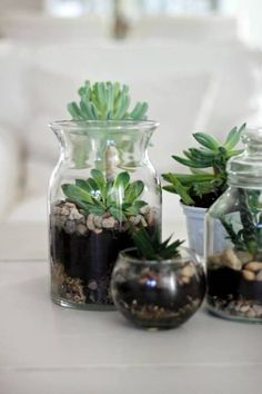 Simple succulent terrarium