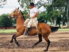 Argentinian gaucho Horse Gear, Horse Tack, Horse Costumes, Polo, Cowboy And Cowgirl, Saddles, Countries Of The World, South America, Equestrian