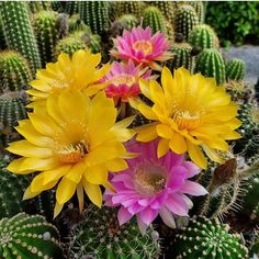 thejungalow: cacti blooms look like they're all dolled up for the weekend! - All For Gardening Boho Kitchen, Kitchen Decor, Beautiful Hands, Boho Decor, Diy And Crafts, Cactus, Wall Decor, Dolls, Amazing