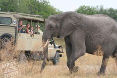 Botswanan safari Safari, Elephant, Animals, Animales, Animaux, Elephants, Animal, Animais