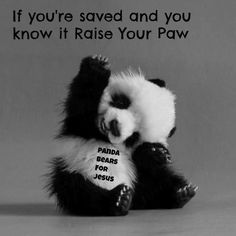 If Pandas believe this, then how can you not? :P Just sayin.