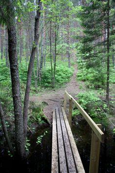 Nuuksio in Espoo, Finland Finnish Words, Birches, Miguel Angel, Best Cities, Forests, Seas, Calming, Outdoor Activities, The Great Outdoors