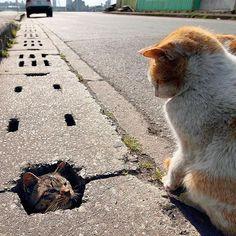 só você pra me fazer rir hahaa !! Sai dai gatinho, vêm pra dentro do meu coração. Porque te amo muito !!