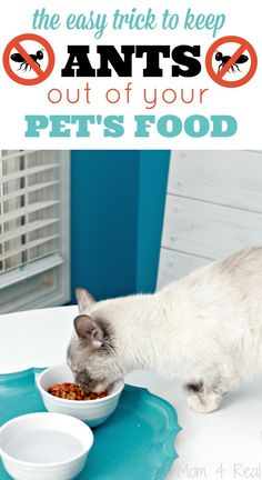 How To Keep Ants Out Of Pet Food With No Chemicals