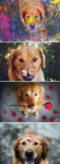 """Click visit site and check out Cool """"Golden Retriever"""" t-shirts. This website is outstanding. TIP: you can search your name or your favorite shirts at search bar on the top."""