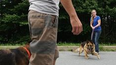 Dog Training - How to Work With Aggressive Dogs. Online Dog Training, Dog Training Courses, Dog Separation Anxiety, Dog Anxiety, Dog Last Day, E Collar Training, Dog Emotions, Teach Dog Tricks, Dumb Dogs
