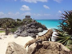 Mayan ruins in Tulum. Top Places To Travel, Great Places, Places To Go, Cancun Mexico Vacation, Tulum Mexico, Riviera Maya, Tulum Mayan Ruins, Mayan History, Beach Backdrop