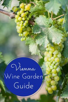 As Vienna is one of the few metropolitan cities in the world with wineries within the city limits, visiting the Vienna Wine Gardens is a unique and memorable way to spend an afternoon in the City of Music. This guide will help you plan your perfect day! Sweet Champagne Brands, Margaret River Wineries, Virginia Wineries, Wine Tourism, Wine Guide, Sustainable Tourism, Wine Case, Garden Guide, Cabernet Sauvignon