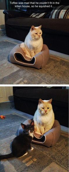 The cat's face is priceless!
