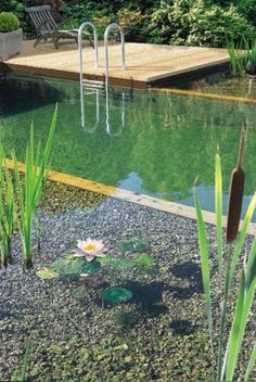 Swimming Pool Pond, Natural Swimming Ponds, Water Pond, Water Garden, Above Ground Pool, In Ground Pools, Aqua Pools, Diy Pond, Pond Fountains