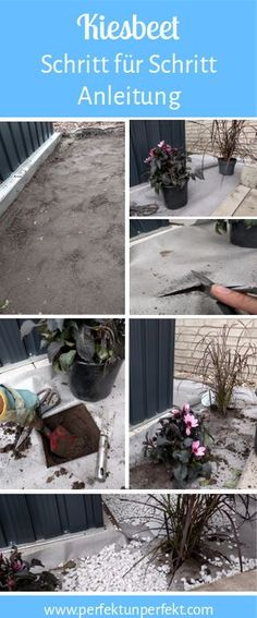 DIY create and design a pebble bed for the shade front garden instruction garden plants gray ideas Balcony Plants, Balcony Garden, Garden Plants, Landscaping Around Trees, Backyard Landscaping, Garden Steps, Balcony Design, Diy Garden Projects, Hedges