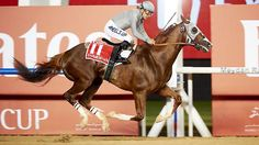 California Chrome pulls away to win the Dubai World Cup by 5 lengths