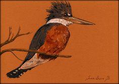 ORIGINAL-Ringed  Kingfisher bird cute by SanMartinArtsCrafts