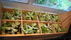 Wood Basket with Living Succulents. $75.00, via Etsy.