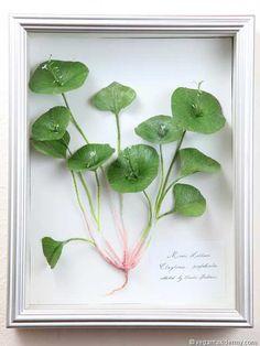 Miner's Lettuce (Claytonia perfoliata), 3-D crepe paper sculpture by Aimée Baldwin