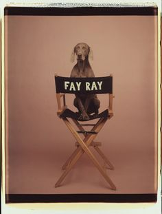 Fay Ray is the reason I fell in love with Weims.