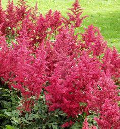 Jaloangervo Montgomery Buy Flowers, Colorful Flowers, Pink Perennials, Annual Plants, Shrubs, Nature, Outdoor, Terrace Ideas, Naturaleza