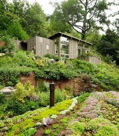 Feldman Architecture: Mill Valley Cabins - Thisispaper Magazine