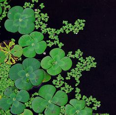 Water Plants are what make the ponds and swamps green // tropicalart77