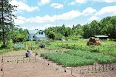 build a survivalist homestead