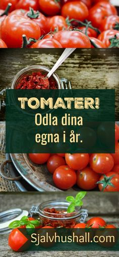 Inget slår känslan att skörda sina egna hemodlade tomater.