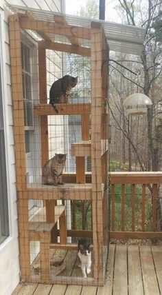 Porch time, spring is in the air! : cats playground outdoor diy - Tracy - Porch time, spring is in the air! : cats playground outdoor diy Porch time, spring is in the air! Diy Pour Chien, Cat Habitat, Outdoor Cat Enclosure, Diy Cat Enclosure, Diy Cat Tree, Outdoor Cats, Cat House Outdoor, Outdoor Cat Cage, Cat Playground