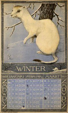 21-12-2015 monday. Winter Solstice. Stoat in winter fur (Mustela erminea), hermelijn in wintervacht. (Verstijnen, H., illustrator. Winter 1929. Dutch calendar page)