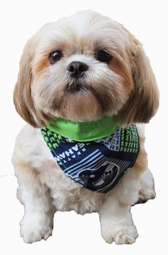 DIY Dog Bandana. Prepare your furry friends for the big game! The Seattle Seahawks are going to the Super Bowl! Fabric available here: http://store.bfranklincrafts.com/Seahawks_Fabrics_s/1871.htm  #Crafts #party
