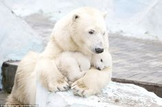 Loving: The heartwarming scenes were captured by keen photographer Vera Salnitskaya, 29, at Novosibirsk Zoo in Russia