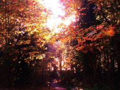 Through the Fall Forest. Autumn Photography. Nature by ForsFolium, $8.00