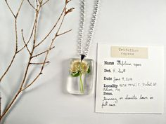 White Clover Trifolium repens Botanical Jewelry by MossoftheWoods, $15.00