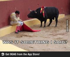 Y U No play anymore?  They make jokes of this but actually this matador is having a moment of conscience. This was his last bull fight before becoming an advocate for the bulls ~!~