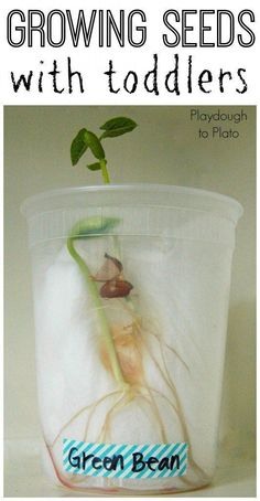 Super helpful tips for growing seeds with preschoolers and toddlers. Fun science for spring.