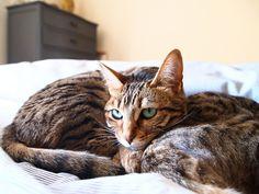 Cat sibling rivalry