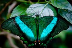 The Gorgeous Butterfly
