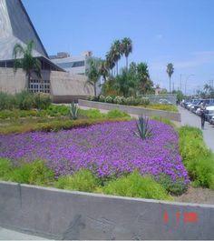 1000 images about plantas para mi jard n on pinterest