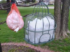 """Nesting material to attract Goldfinches (cotton balls.) To the left is my old holder- a small sack that onions came in. To the right is my new & improved version which I made this morning. It's a garage sale find plant holder/hanger shaped like half of a birdcage. I fitted 1/4"""" hardware cloth inside to hold the cotton. Can't wait to see how the Goldfinches will like it!"""