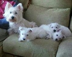 Mami con sus cachorros