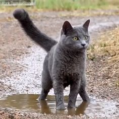 Awesome funny cats detail are offered on our site. look at this and you wont be sorry you did. Cute Funny Animals, Cute Baby Animals, Cute Cats, Funny Cats, Cute Animal Humor, Pretty Cats, Beautiful Cats, Animals Beautiful, Cute Animal Videos