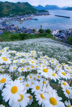 Beautiful scenery at Shimanami Kaiun within the Mihara City, Hiroshima Prefecture Japan Beautiful World, Beautiful Images, Beautiful Flowers, Beautiful Beach, Beautiful Scenery, Flowers Nature, Wild Flowers, Daisy Flowers, Landscape Photography