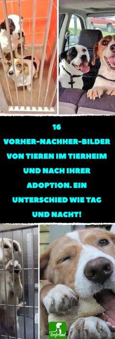 16 Vorher-Nachher-Bilder von Tieren im Tierheim und nach ihrer Adoption. Ein Unterschied wie Tag und Nacht! #hund #katze #tierheim #adoption