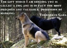 Dog Quotes - Wonderful Sayings About Man's Best Friend.