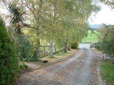 long driveway silver birch